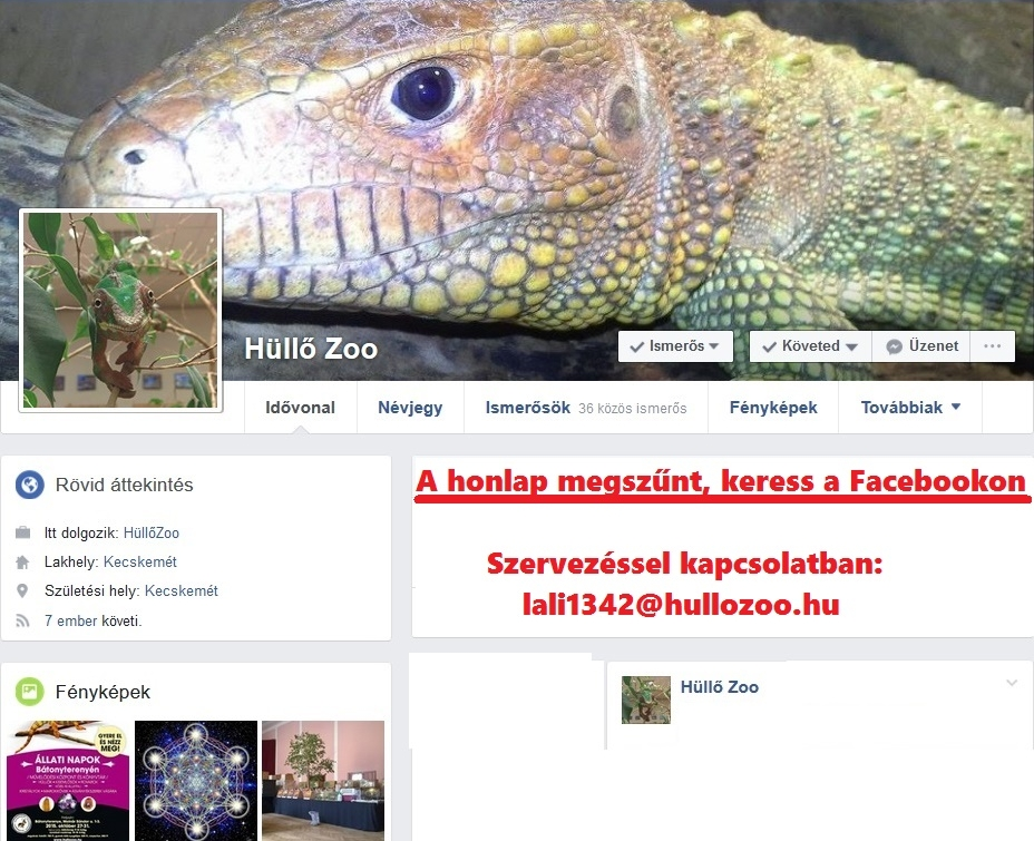 Hűllőzoo Keress a Facebook-on!